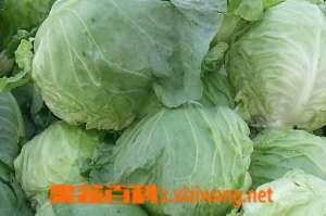 甘兰菜的功效 甘蓝菜可对抗四大疾病